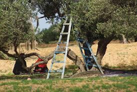 decouvrir zarzis : la culture de l'olivier a zarzis